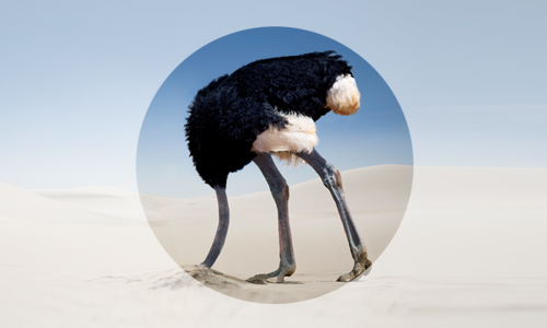struisvogel.png